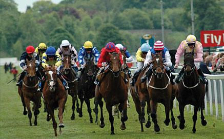 Ripon Races