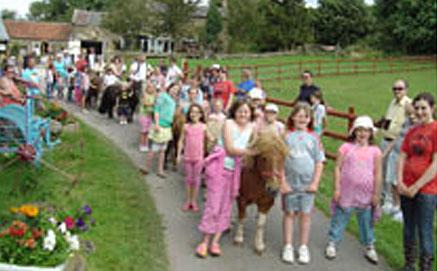 Shire Horse Farm
